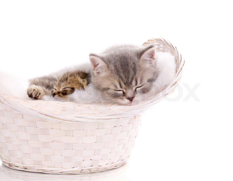 4 Cute Kittens Sleeping in a Drawer  witvideoscom