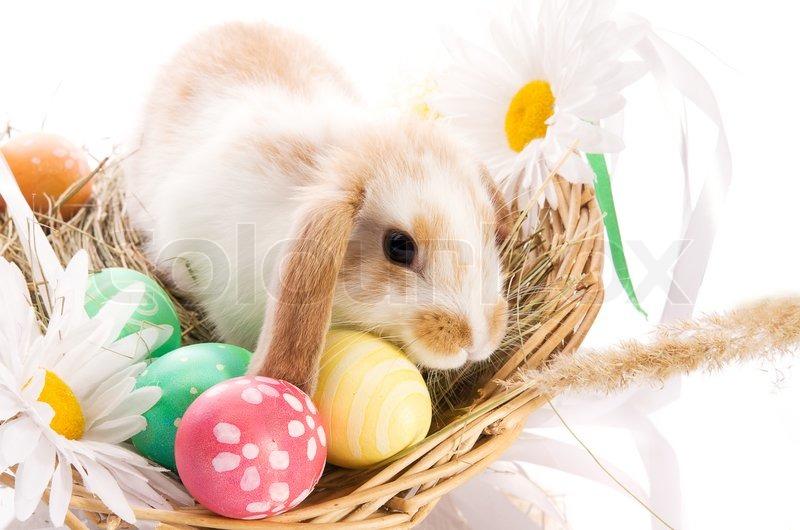 Buy Stock Photos of Easter Bunny | Colourbox