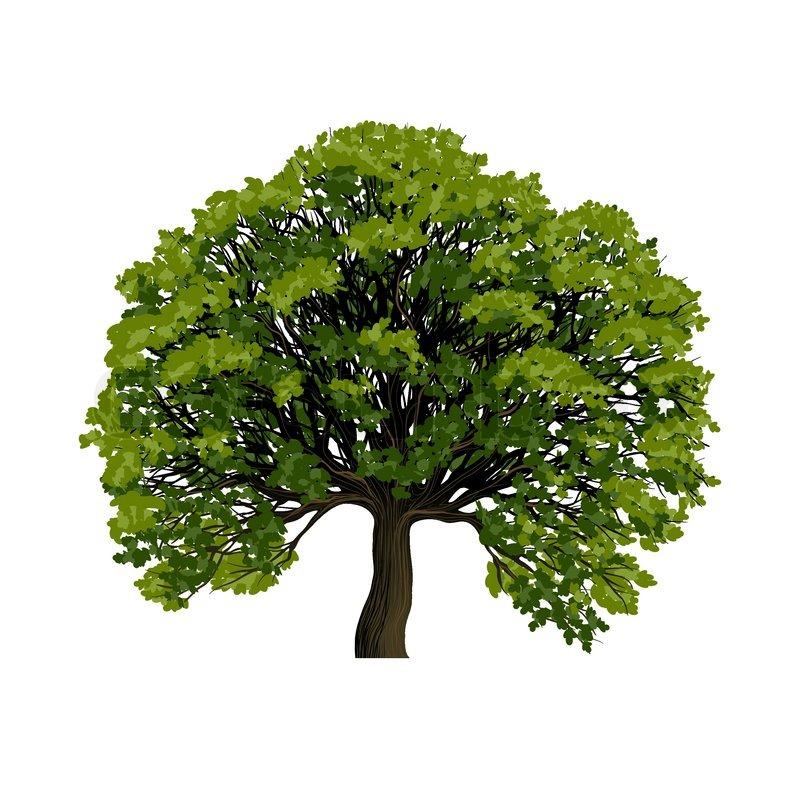 Architecture Tree Symbol Big Green Tree Vector Symbol