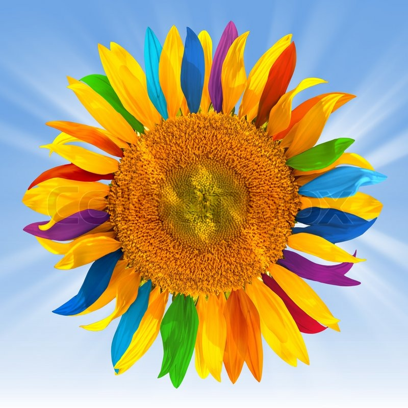 Stock image of 'Sunflower with multicolored petals'