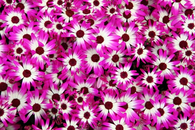 Violet and white flowers stock photo colourbox mightylinksfo