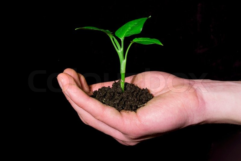 Stock image of 'Plant in hand'
