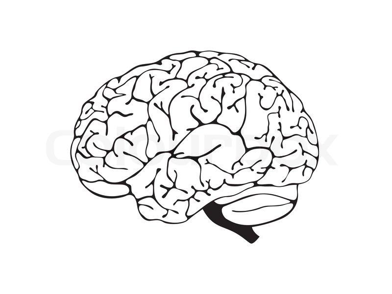 Gehirn Schwarz Weiß