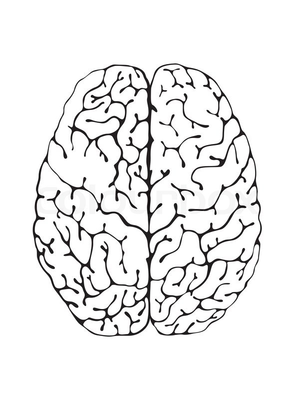 Human Brain Black And White The Brain is a Black And White