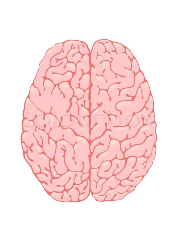 brain top view vector - photo #7