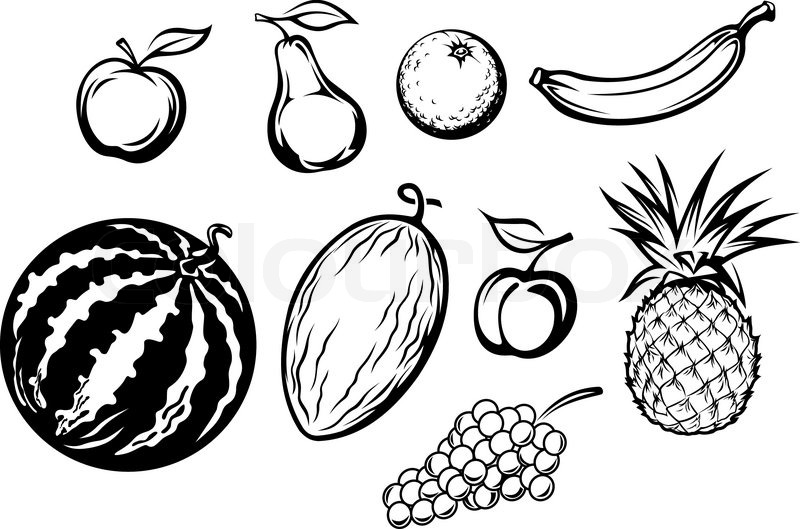 Line Art Fruits : Set of isolated fresh fruits stock vector colourbox