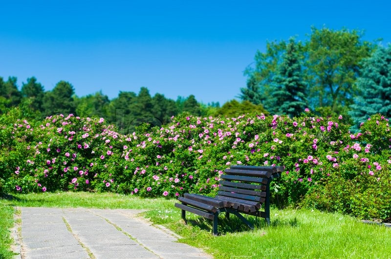 empty wooden park bench on a sunny day stock photo
