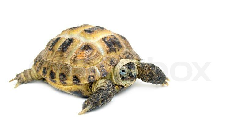 turtle on a white background stock photo colourbox