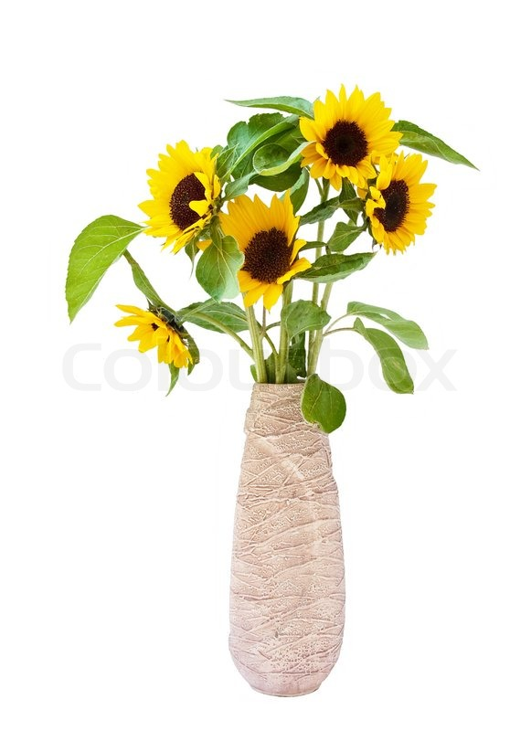 Bouquet Of Sunflowers In A Vase Stock Photo Colourbox