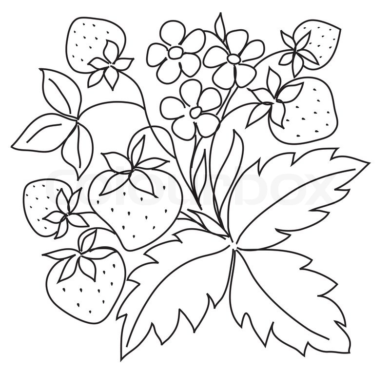 Black sketch of strawberry | Stock Photo | Colourbox