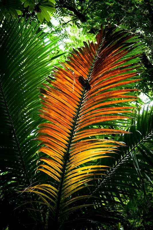 Colorful Leaf In A Tropical Rainforest Stock Photo