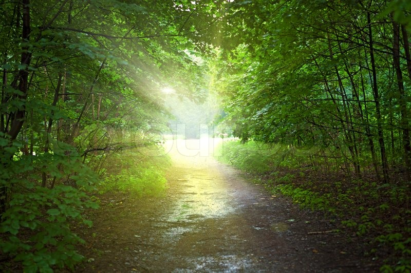 Stock Image Of U0027Light In The Forest After Rainu0027