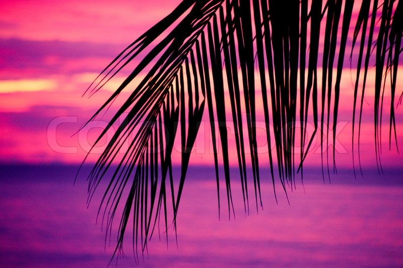 Palm Tree Leaf Silhouette in a