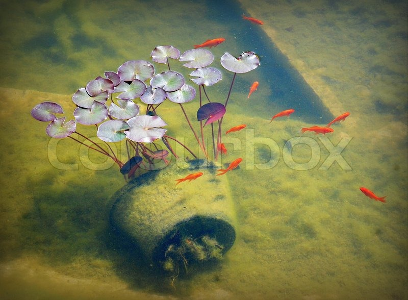 Goldfish and plants in a pond stock photo colourbox for Best pond plants for goldfish