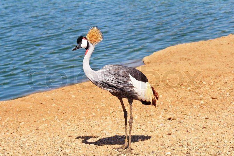 Die anmutige Vogel mit herrlichen Gefieder auf dem Kopf | Stockfoto ...