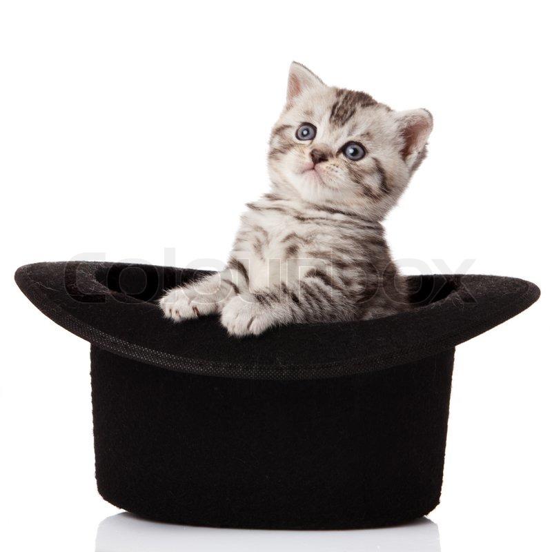 House Sitting Cat