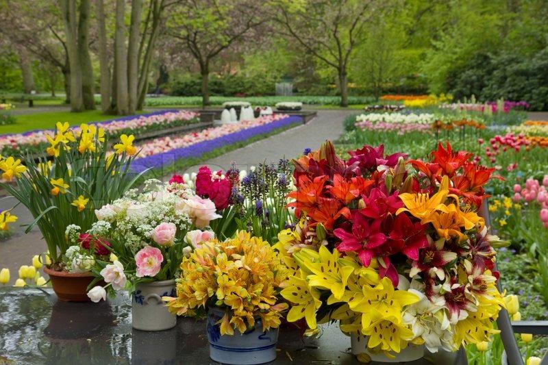 Flower shop in keukenhof garden stock photo colourbox mightylinksfo