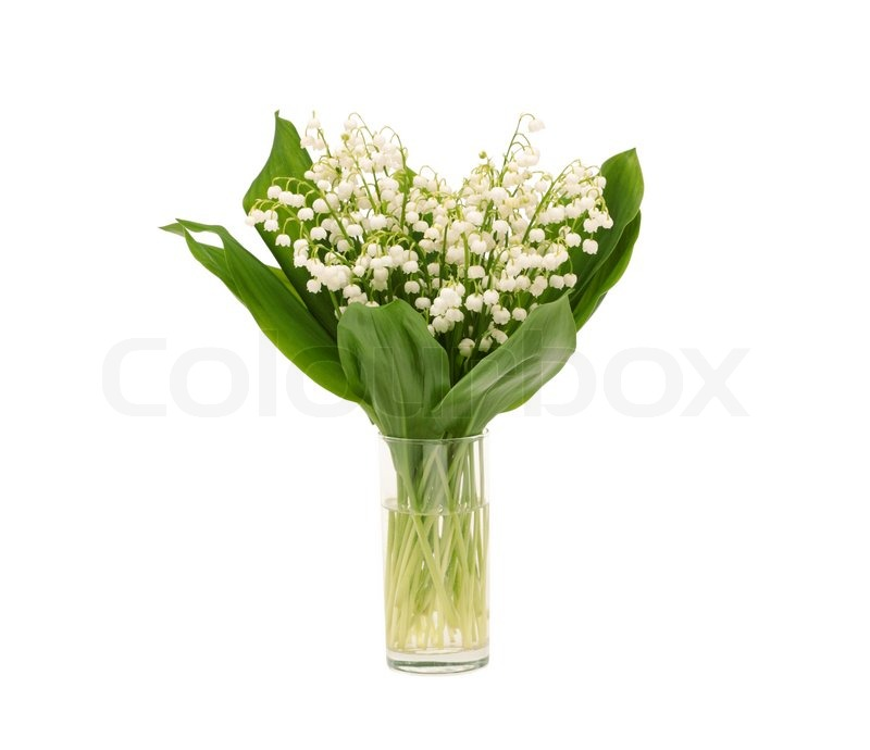 Lily Of The Valley Bouquet: Bouquet Of Lily Of The Valley On White