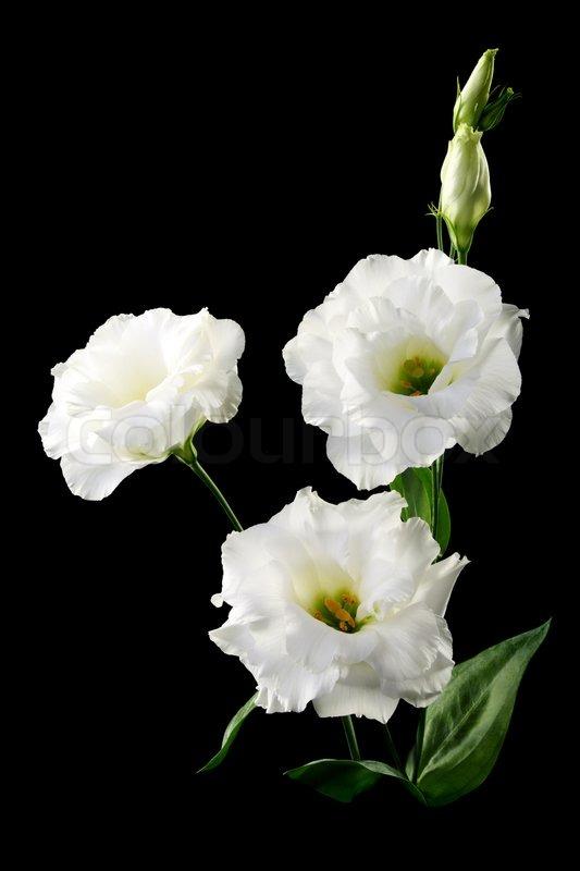 Nearly Natural 4665 Peony Centerpiece Silk Flower Flower arrangement stock photography