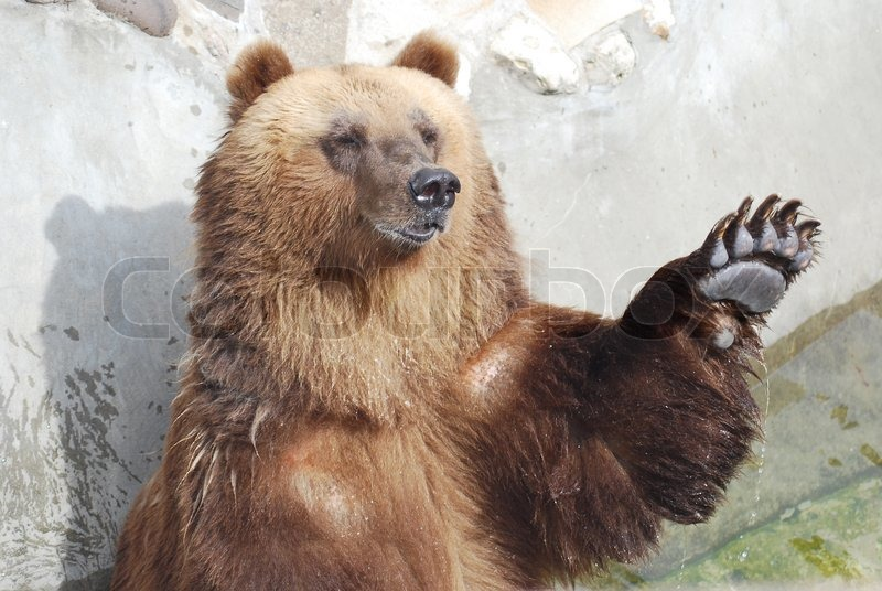 Real Bears In Strong Making Out