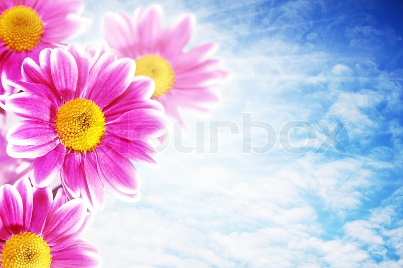 Pretty pink flowers against blue skies abstract natural backgrounds pretty pink flowers against blue skies abstract natural backgrounds stock photo mightylinksfo Gallery