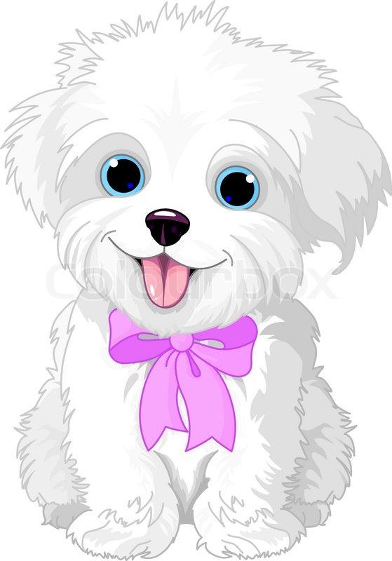 white lapdog stock vector colourbox