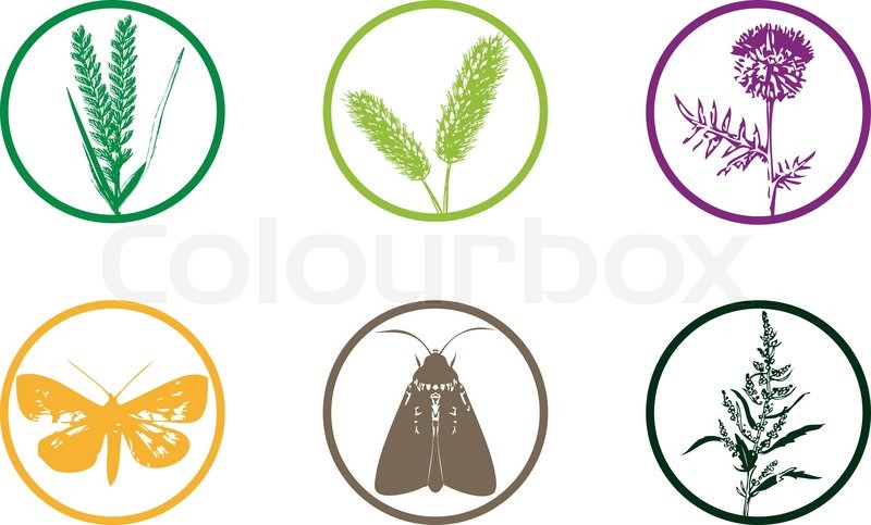 Plant Weed Icon Set Stock Vector Colourbox