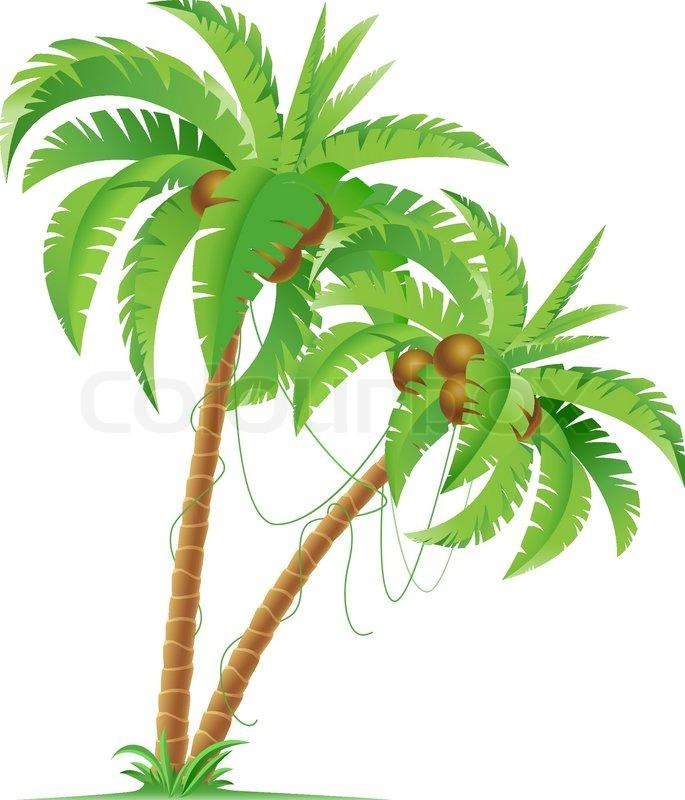 Palm Tree Stock Vector Colourbox