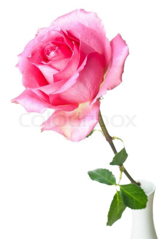 Filipina Roses Forum
