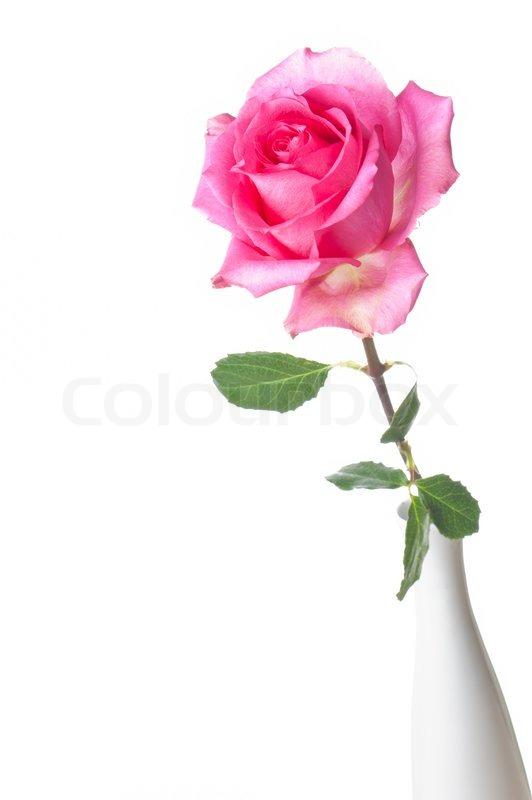 single pink flower rose - photo #39