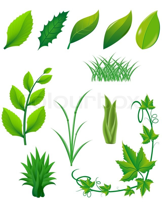 icon set of green leaves and plants for design stock vector rh colourbox com vector plants free download vector planes