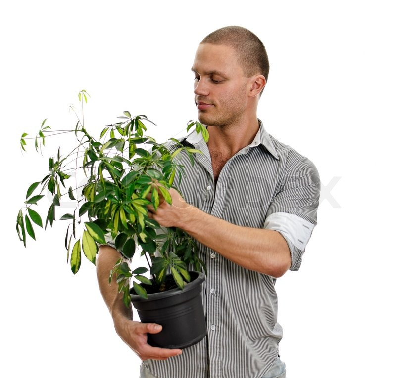 Man Holding A Pot With Plant Isolated Stock Image Colourbox