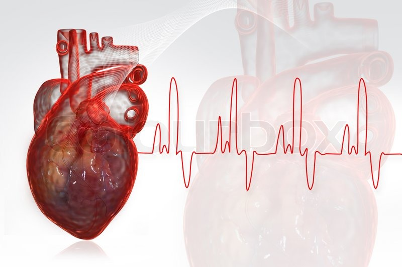 Stock image of 'Human heart'