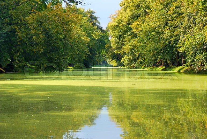 Green park trees and green pond water stock photo for Green water in pond
