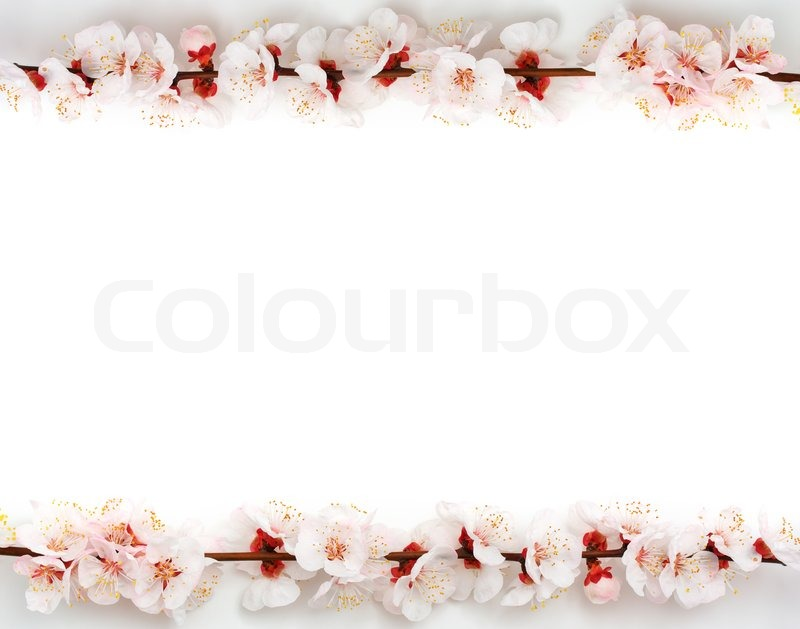 Stock image of 'Frame from sakura'