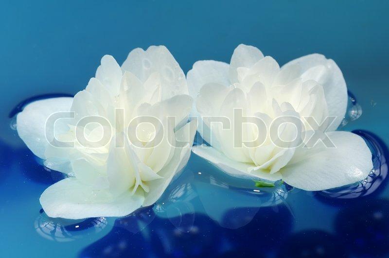 Pretty white jasmine flowers floating on water stock photo colourbox mightylinksfo