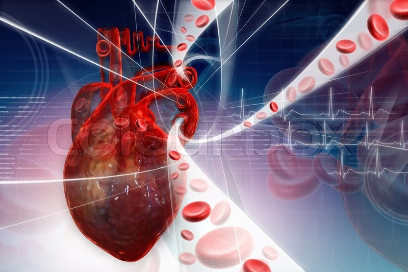 Heart pumping blood | Stock Photo | Colourbox