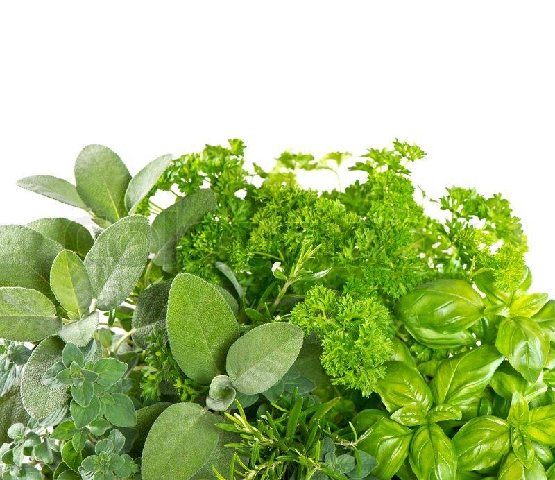 Variety fresh herbs