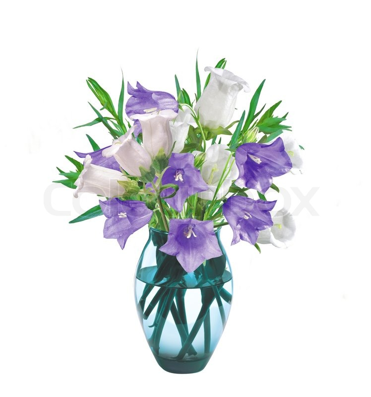 Bell flowers in vase isolated on white stock photo colourbox mightylinksfo