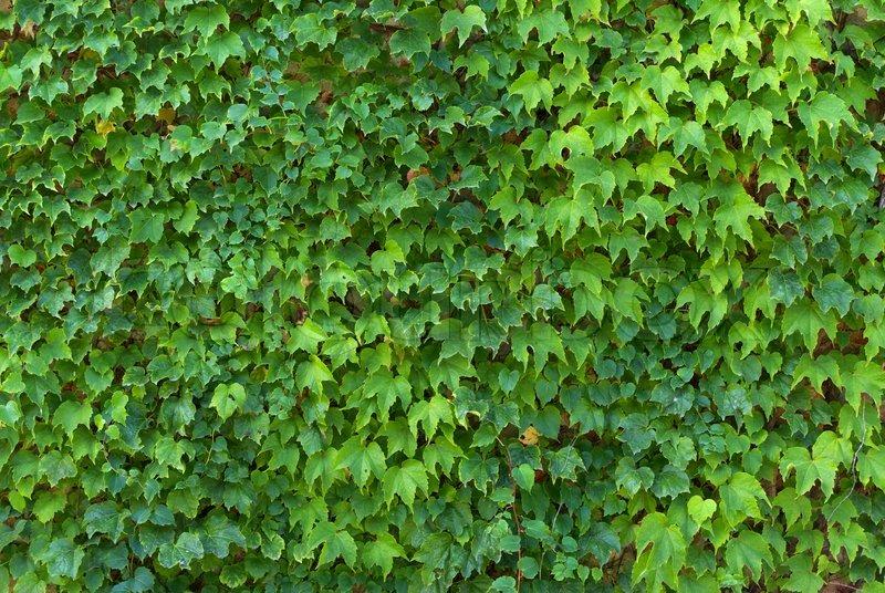 Leaf Texture Stock Image Colourbox