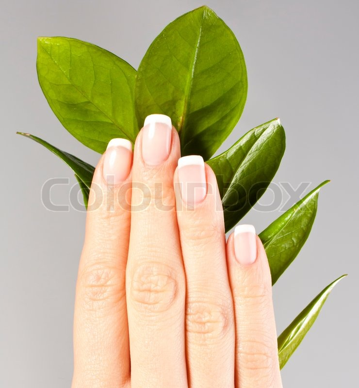 Beautiful hands with French manicure nails | Stock Photo | Colourbox