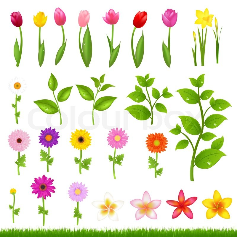 Flower  on Stock Image Of  Flower Borders   8