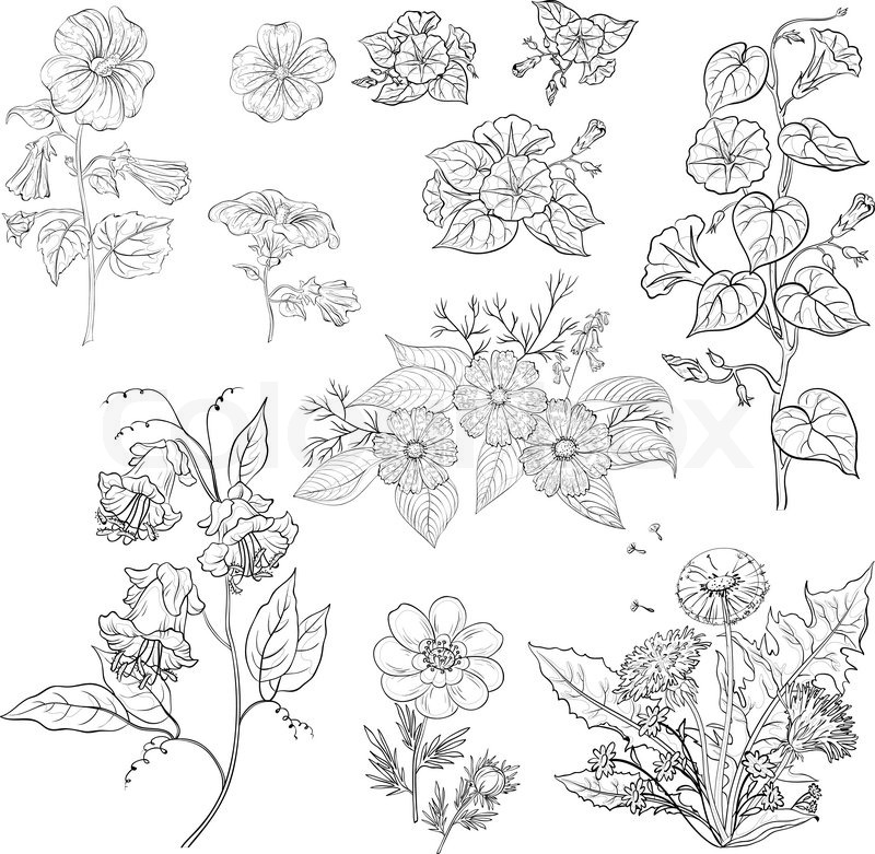 Flower vector outline images for Decor outline
