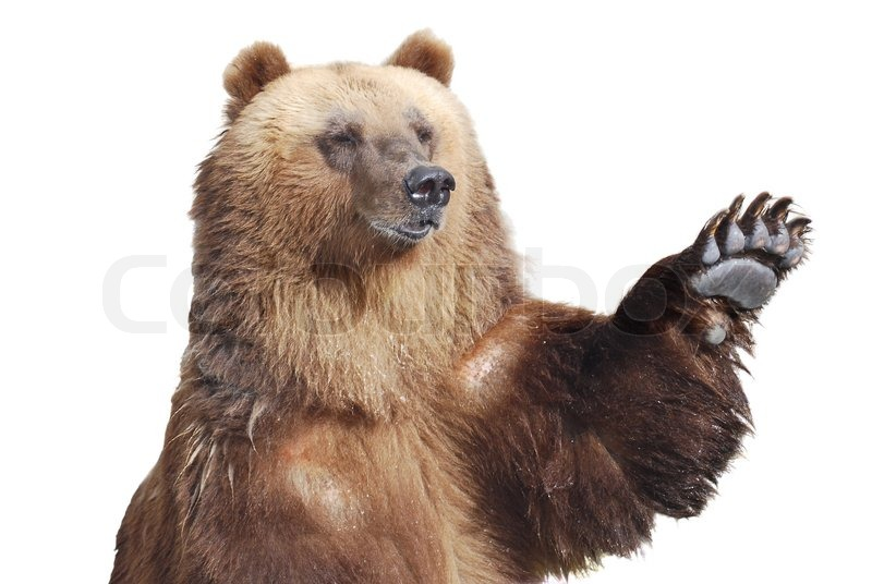 Brown Bear Claws Images & Pictures - Becuo