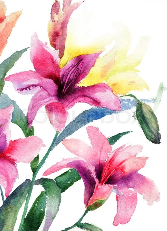 beautiful lily flowers  stock photo  colourbox, Natural flower