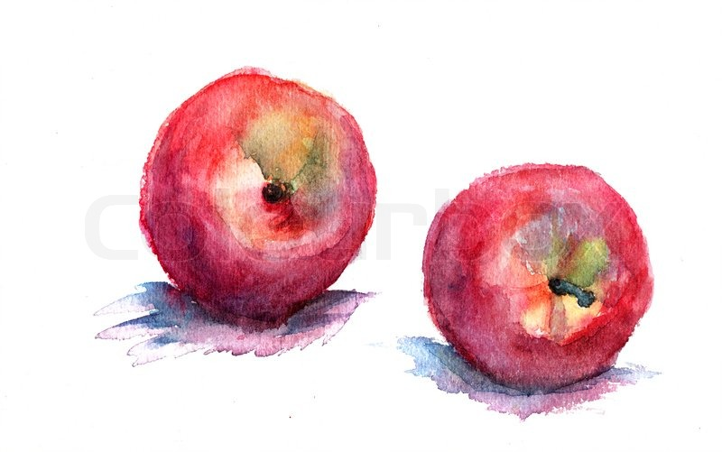 watercolor illustration of nectarine stock photo colourbox
