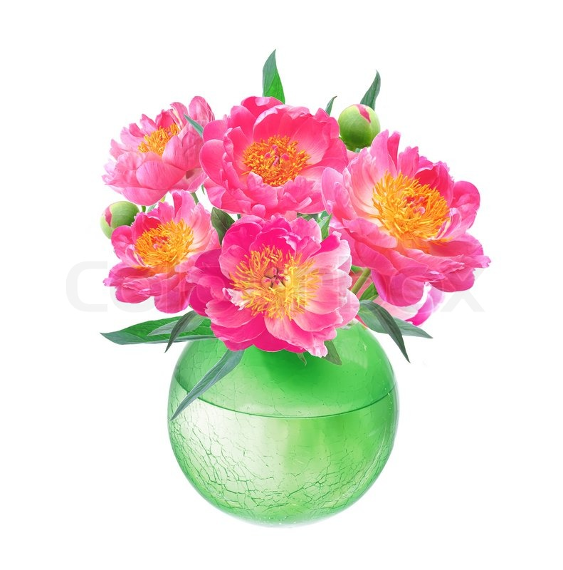 Peony Flowers Bouquet In Vase Isolated On White Background Stock