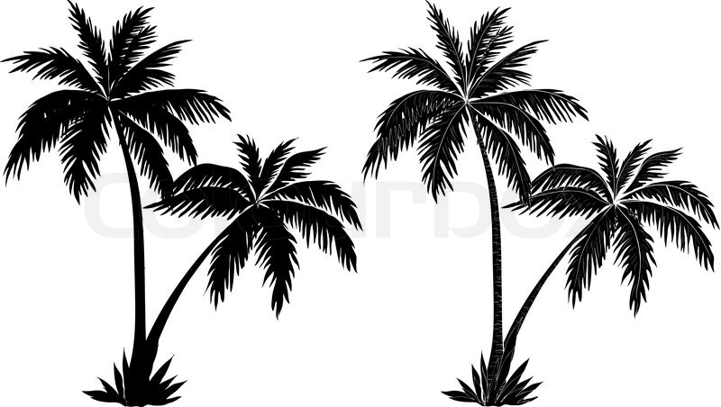 Palm Trees Black Silhouettes Vector 4437022
