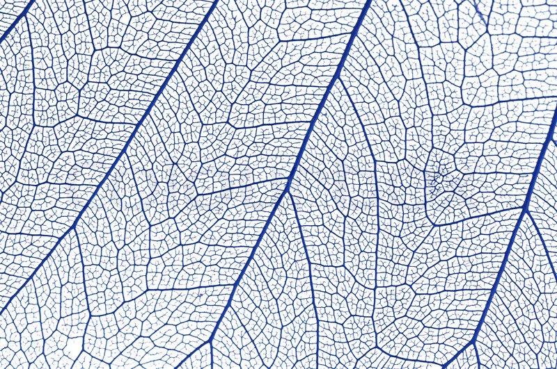on leaf blue - photo #23