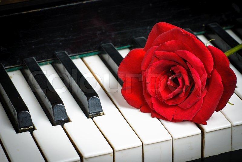 klaviertastatur und rose stockfoto colourbox. Black Bedroom Furniture Sets. Home Design Ideas